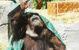 """Sandra is in captivity, living in absolute solitude in the Buenos Aires city zoo"" argued AFADA, which requested the orangutan be transferred to a sanctuary"