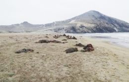 Agents said the bodies were of young as well as old animals, the official Andina news agency reported.