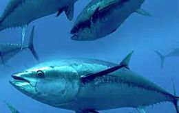 EU is the main market for Ecuadorian tuna, accounting for 65% of exports. The country is also the leading supplier of canned and pre-cooked tuna.