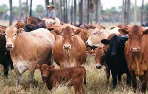 Russia is Paraguay's main market for beef and is only willing to pay 3.300 dollars per ton compared to an average 4.800 dollars until last September