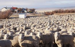 According to the Chilean stats office, farming in Magallanes incorporated 2.040 people to the industry during Sept-Nov