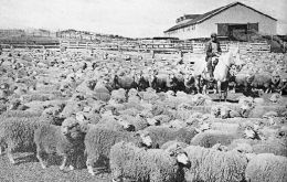 In the late 1880 sheep from the Falklands were shipped to the extreme south of Chile to help start the industry