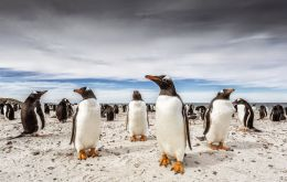 Barry Robertson  image, Bleaker Island, in the Falkland Islands.