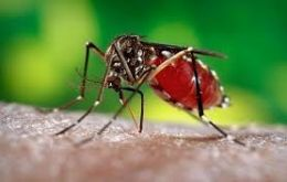 TDH said the first confirmed case of Chikungunya virus disease in Tennessee occurred in 2014 and that since then 42 new cases have been documented
