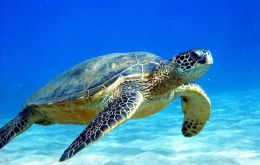 Despite advances, because of the by-catch of endangered sea turtles, certification of Mexico has been delayed until May 2015, says the report