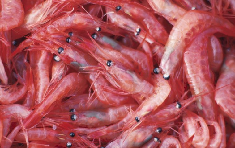 """We will increase our investment in the Antarctic area in terms of krill fishing,"" said Liu Shenli, from China National Agricultural Development Group"