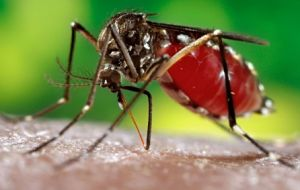 The Aedes mosquito is present in much of the Americas and also transmits dengue fever and chikungunya.
