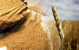FAO upgraded its May 2015 forecast for global production of wheat, coarse grains and rice, anticipating bigger maize harvests in China and Mexico
