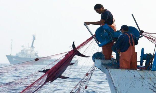 Южная Корея и Китай объединят усилия в борьбе с незаконным ловом рыбы