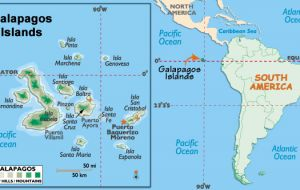 The Galapagos Islands, a chain of islands 1,000 kilometers west of mainland Ecuador, are home to the only penguins in the Northern Hemisphere.