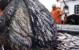 Landings of common hake (Merluccius hubbsi) totaled 116.873 tons, figure which shows a decrease of 3% over that last year (120,451.7 tons).