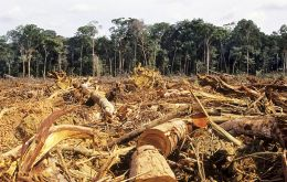 The study by IBGE, says the destruction of Amazon jungles and the savannahs of central Brazil went faster between 2010/12 that in the previous 10 years.