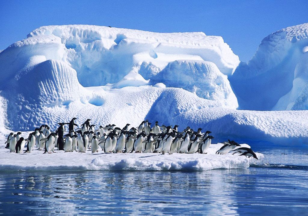 a comparison of conservation and exploitation in antartica Surge in chinese tourists drives rise in antarctica visitors  chinese visited antarctica in 2015-16, compared with fewer than 100 in 2005-06  activity in the antarctic is closely tied to future exploitation of the continent's resources  rwandan national park is a conservation and tourism success story.