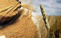 Forecast for global wheat production has been raised, largely reflecting a bigger harvest in the European Union than earlier anticipated.