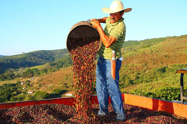 Brazil Largest Coffee Exporter
