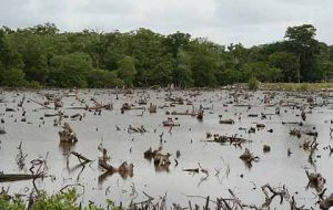 Between 2007 and 2015, Entre Rios province, the region most affected by flooding, lost more than 85,000 hectares (209,800 acres) of native forest