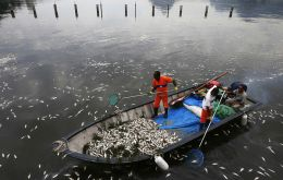 """Officials found rubbish in the water and on the beach as well as a considerable number of dead fish all from the same species of sardine,"" said city officials"