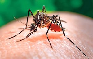 Mosquito transmitted Zika causes a dengue-like illness, with symptoms that include fever, headache, skin rash, red eyes, and muscle ache