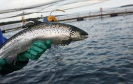 "Multiexports Food admitted having suffered ""significant fish mortality"" and blames the bloom to ""unusual and extreme weather and oceanographic conditions"""
