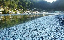 Television news footage showed masses of the lifeless silver fish more than a foot deep choking the waters in and around the river shores and boats.