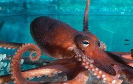 To investigate long-term trends in cephalopod abundance, the study's authors compiled a global database of cephalopod catch rates from 1953 to 2013.