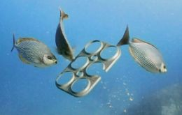 Plastic rings, untold numbers of which end up in rivers and oceans, can be fatal traps for fish, turtles and sea birds