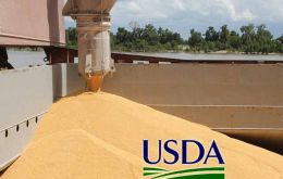USDA trimmed its 2015/16 Brazil corn harvest outlook by 3.5mmetric tons to 77.50m metric tons and its Brazil soy harvest outlook by 2m metric tons to 97m tons