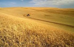 Global wheat production is now pegged at 732 million tons, more than 1% higher than anticipated in June, due to improved prospects in EU, the Russia and the U.S.