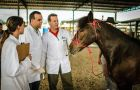 Highly contagious and incurable, glanders has prompted Brazilian agricultural officials to destroy hundreds of horses across the country over the past two years