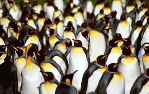 Penguins are some of the main attractions for tourists visiting Falklands