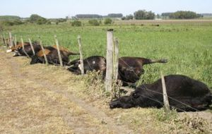 In 2008, lightning in a San Jose ranch, Uruguay, struck a paddock's wire fence, killing 52 of the cattle grazing inside.