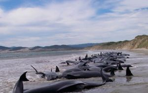In December scientists were shocked by the discovery of 330 whales on a remote beach in the south of Chile