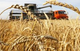 Record global production forecasts for this year's wheat and rice harvests, along with rebounding maize output, are helping keep inventories ample and prices low.