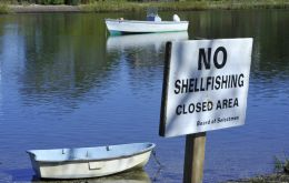 Sale of seed shellfish from Wellfleet Harbor for purposes of aquaculture or propagation is prohibited except for within Wellfleet Harbor.