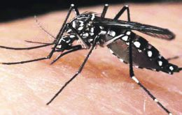 The aedes mosquito is known to carry the zika virus