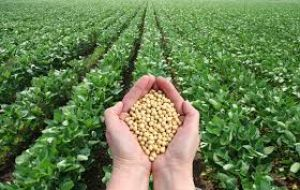 Agroconsult estimates Brazil soybean production at 102.6 MT for 2016/2017, which would  be in line with the 103.5 MMT  estimate by Brazil's CONAB
