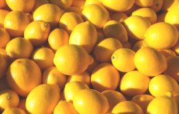 Most Argentina lemons are expected to be shipped to the U.S. between April 1 and August 31, according to the USDA.