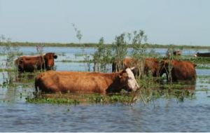 Torrential rains, flash floods and mudslides have destroyed most of the intensive agriculture and seriously hampered cattle and sheep farming