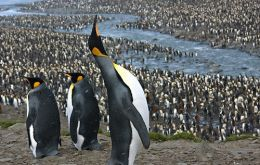 """Penguins are great ambassadors for understanding the need to conserve Southern Ocean resources,"" said Christian Reiss, an Antarctic fisheries biologist at NOAA"
