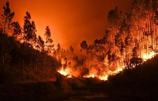 Raging forest fires kill 62 in Portugal