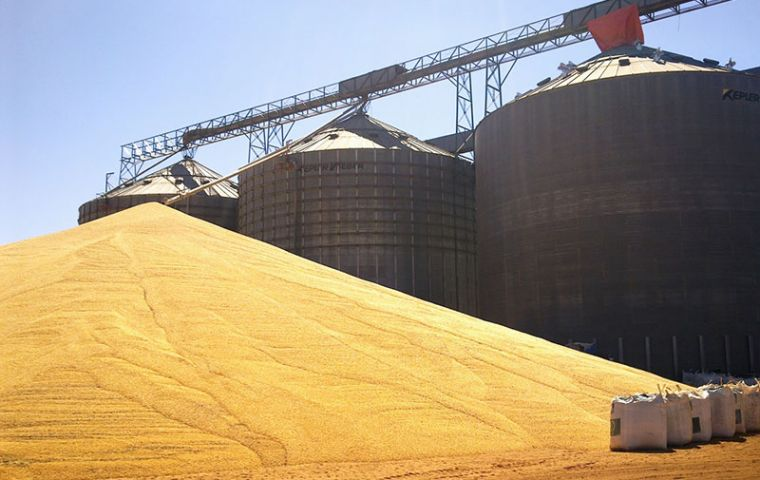 Local prices to growers are down 29% from a year earlier, so farmers are stashing soybeans anywhere they can rather than sell, which is creating a storage crunch