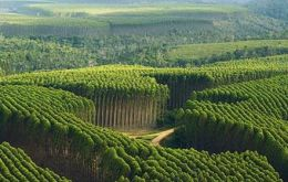 The timberland includes about 20,000 hectares of eucalyptus tree farms. Eucalyptus grown in Uruguay is used to make wood pulp.