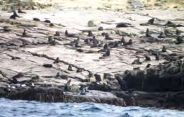 Fur seals photographed on Beauchene Island