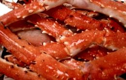 King crab is a benthic crustacean distributed in cold waters of subantarctic origin along the South Atlantic from the Falklands and Tierra del Fuego, to south Brazil.