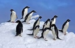 The discovery of the penguin chick deaths has prompted renewed calls for more marine protected areas in Antarctic waters.