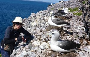 """We need to understand what albatross eat, to identify how marine ecosystems might be changing in response to pressures such as climate change or fishing"""