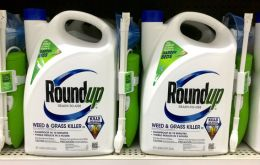 The current license expires at the end of 2017. Europe has been stuck over what to do with the chemical, key ingredient in Monsanto Co's top-selling Roundup