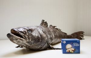 """Our leading product is the South Georgia Patagonian Toothfish. There is a strong demand from customers in Europe and the UK"" quoted Mr. Wallace"