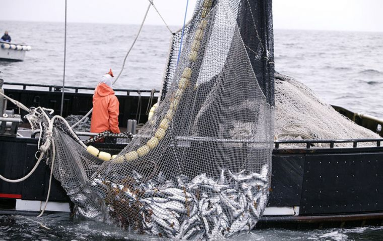 Around 60% of the world's assessed fish stocks are fully exploited and 30% are already overexploited, according to the 2016 SOFIA report, published by FAO