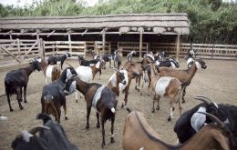 Brucellosis is caused by a bacteria and the outbreak apparently was located in a flock of goats as the Vet School from the Asunción University in Paraguay